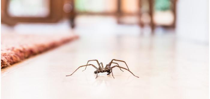 Soñar con Arañas que se mueven