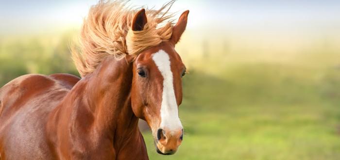 Soñar con caballos crin