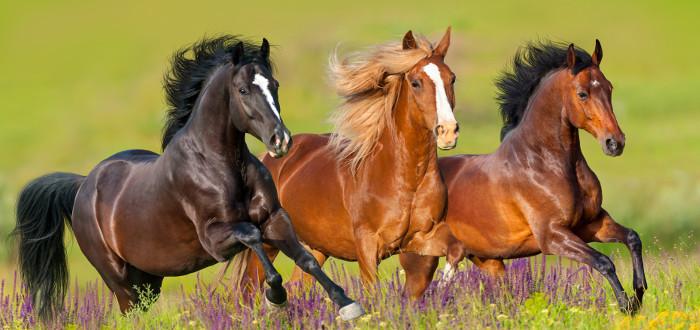 Soñar con caballos salvajes