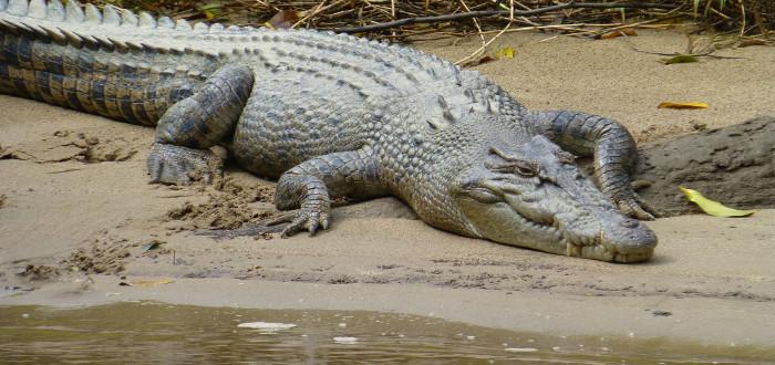 Soñar con cocodrilos río