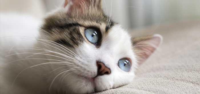 soñar con gatos 2