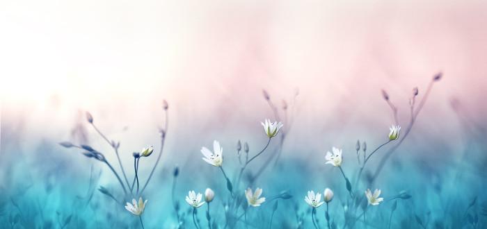 Soñar con Flores azules