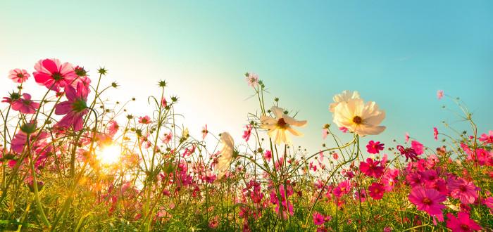 Soñar con Flores campo