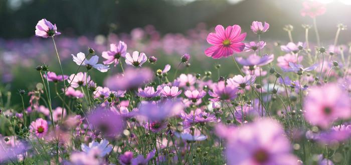 Soñar con Flores púrpura
