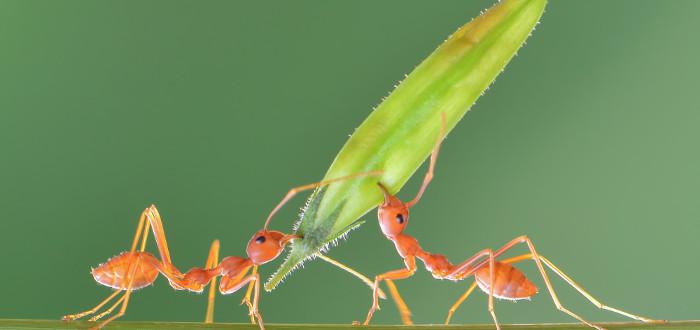 Soñar con Hormigas dos