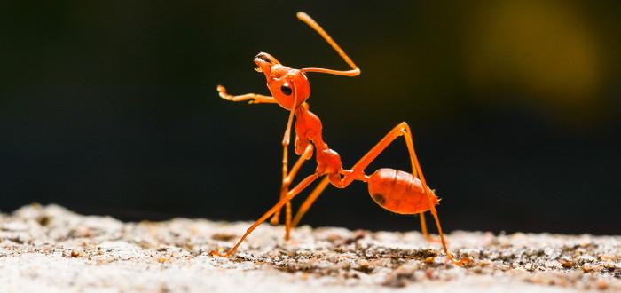 Soñar con Hormigas sola