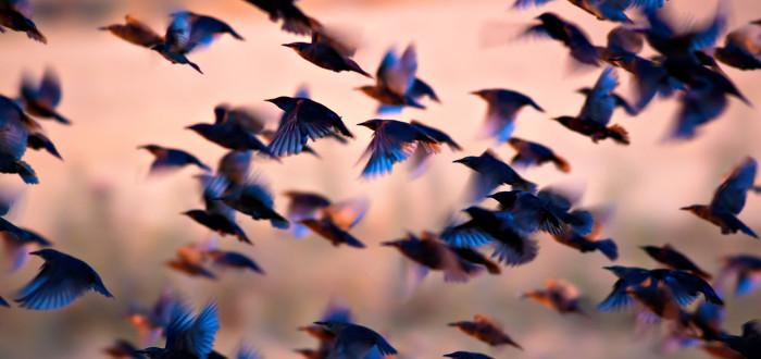 Soñar con Pájaros muchos