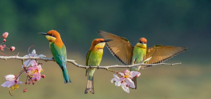 Soñar con Pájaros rama