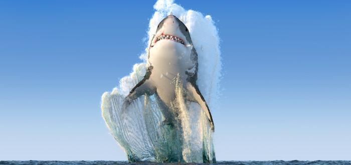 Soñar con Tiburones salto