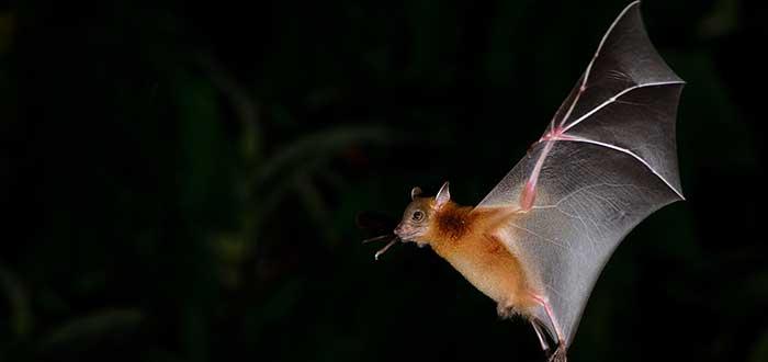 Soñar con murciélagos 1
