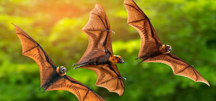 Soñar con murciélagos 2