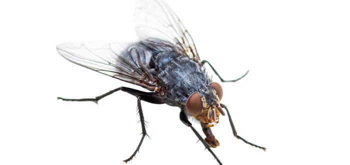 soñar con moscas 2