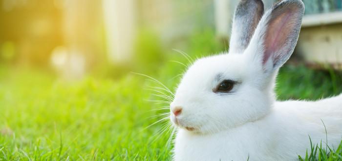 Soñar con conejos blanco