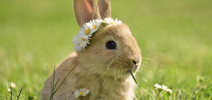 Soñar con conejos margaritas