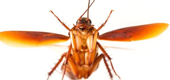 soñar con cucarachas 3