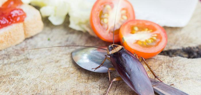 soñar con cucarachas 2