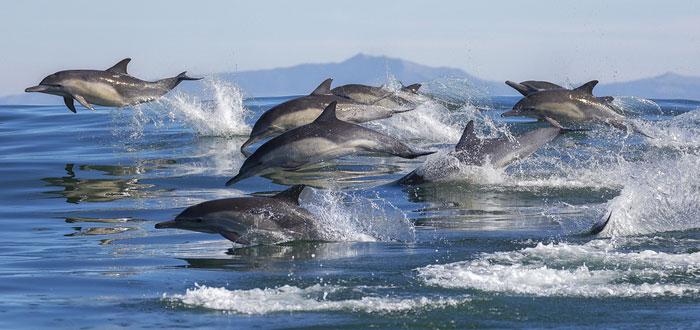 soñar con delfines 2