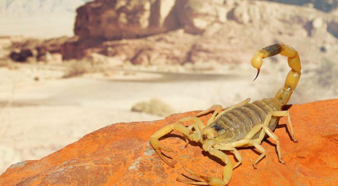 soñar con escorpiones