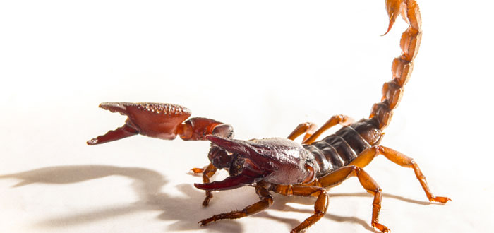 soñar con escorpiones 3