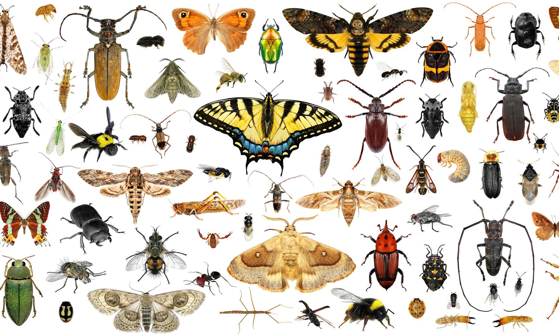 Resultado de imagen para insectos