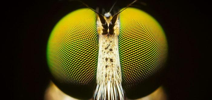 soñar con insectos 2