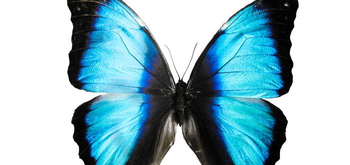 soñar-con-mariposa-