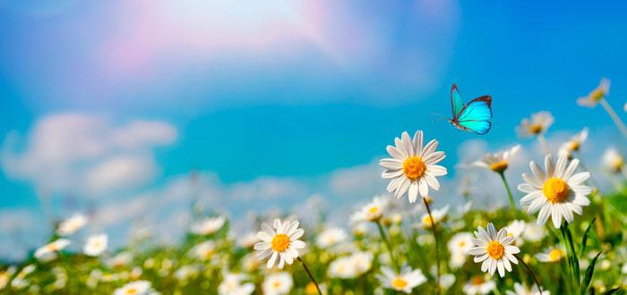 soñar-con-mariposa-3