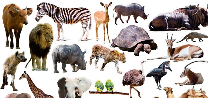 soñar con animales 2