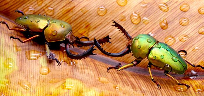 soñar con escarabajos 2