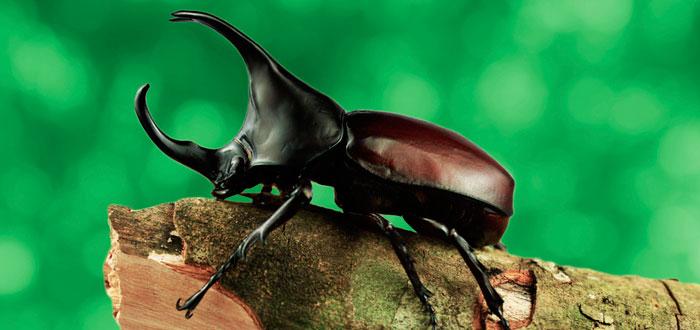 soñar con escarabajos 3