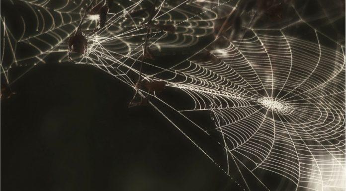 Soñar con Arañas Negras