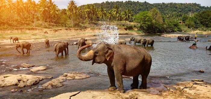 Soñar con Elefantes baño