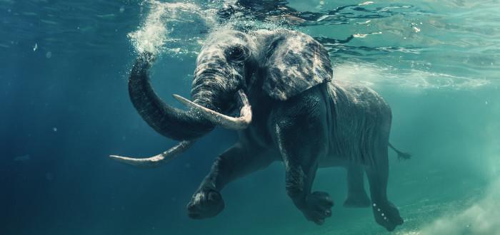 Soñar con Elefantes nado
