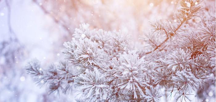 Soñar con Nieve árbol