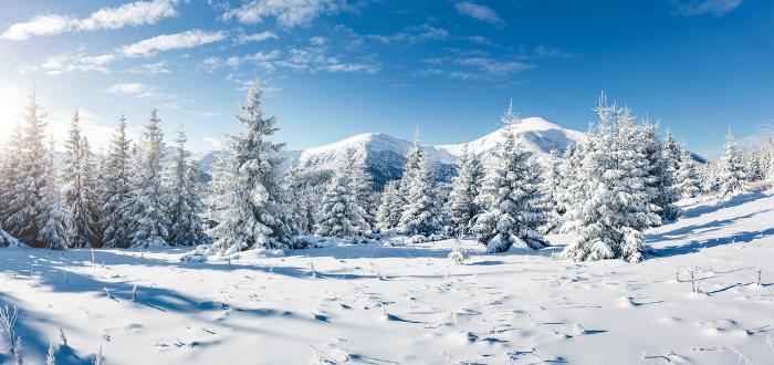 Soñar con Nieve bosque