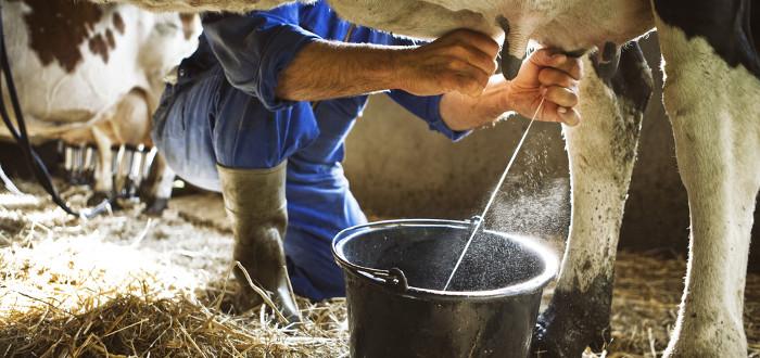Soñar con Vacas muñir