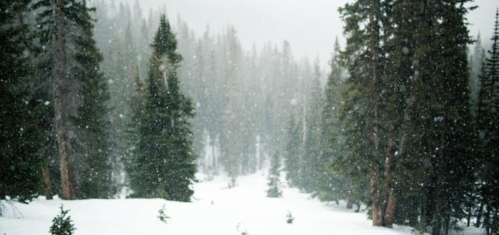 Soñar que está Nevando bosque