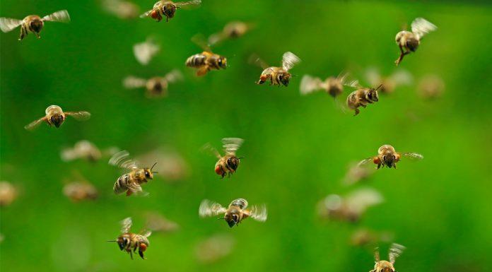 soñar con insectos voladores