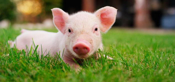 soñar con cerdos 3