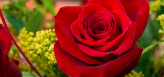 Soñar con Rosas Rojas verde