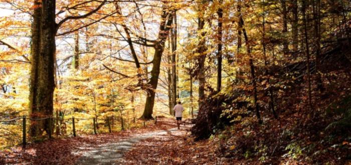 Soñar con Huir bosque