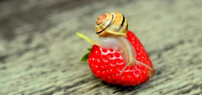 Soñar con Caracoles fresa
