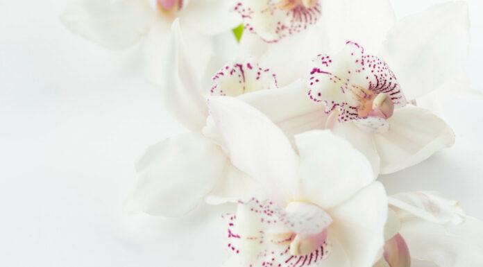 Soñar con flores blancas