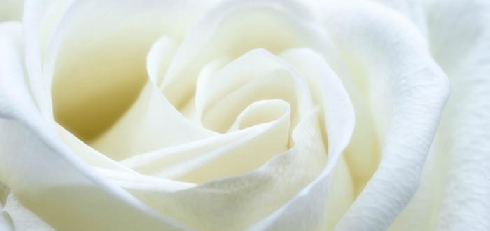 Soñar con flores blancas rosas