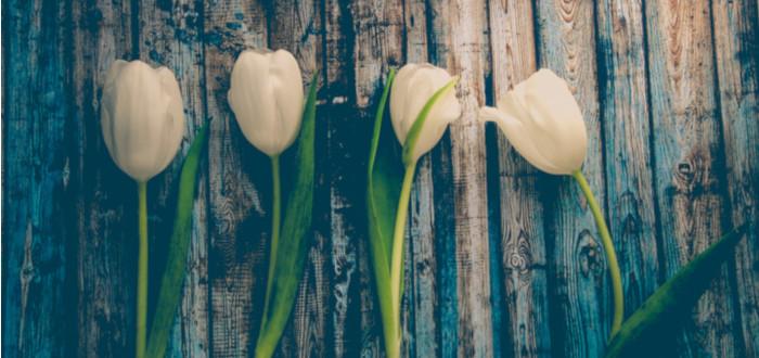 Soñar con flores blancas tulipanes