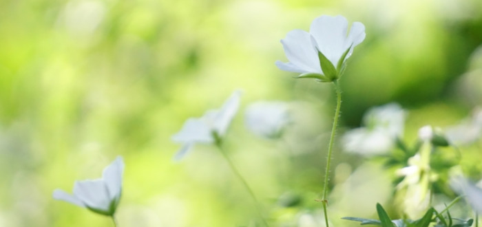Soñar con flores blancas verdes