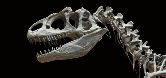 Soñar con Dinosaurios huesos