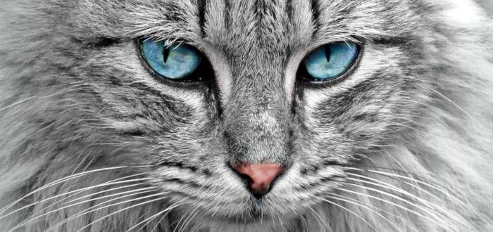 Soñar con Felinos Gato