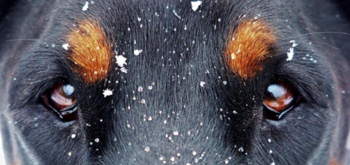 Soñar con Perro Negro Nieve