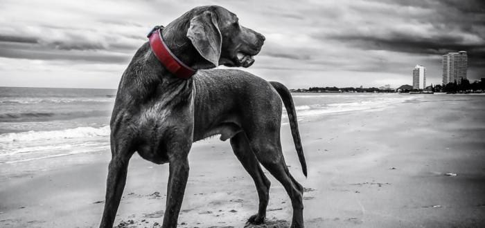 Soñar con Perro Negro Playa
